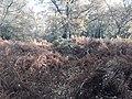 Earthwork enclosures, Oare Common, Berkshire 07.jpg