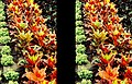 Eden Tropical Biome plants on a slope 3D SL46 17R16L small.jpg