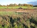 Edgware Way Grassland.JPG