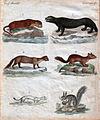 Edles Pelzwerk - Vierfüßige Tiere Quadruped IX.(1).jpg