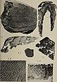 Eesti Looduseuurijate Seltsi aastaraamat (1908) (20993556339).jpg