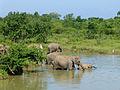 Eléphants-Uda Walawe National Park (1).jpg
