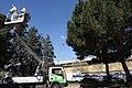 El Ayuntamiento pone en marcha un plan de choque contra la procesionaria 03.jpg