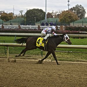 Eldaafer - Eldaafer comes down the stretch to win the Breeders Cup Marathon