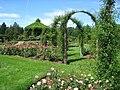 Elizabeth Park, Hartford, CT - rose garden 4.jpg