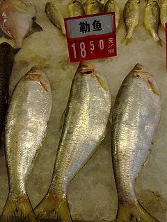 Ilisha (genus) Genus of ray-finned fishes