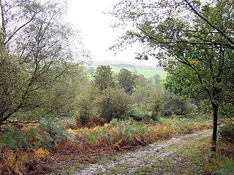 Frant - Path in Whitehill Wood, Eridge Park