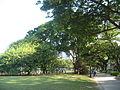 Esplanade Park 3.JPG