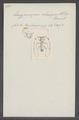 Euryprosopus - Print - Iconographia Zoologica - Special Collections University of Amsterdam - UBAINV0274 033 19 0008.tif
