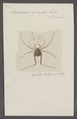 Eusarcus - Print - Iconographia Zoologica - Special Collections University of Amsterdam - UBAINV0274 069 05 0008.tif