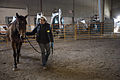 FEMA - 40531 - A horse is walked at the Emergency Pet Shelter set up at the Red River Valley Fairground in North Dakota.jpg