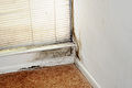 FEMA - 44263 - Mold Remediation Awareness.jpg