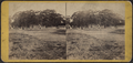Felter Hotel, from Robert N. Dennis collection of stereoscopic views.png