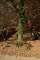 Feuilles vertes entourant le tronc (22391413427).jpg