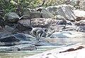 Flora and fauna of Chinnar WLS Kerala India (27).jpg