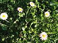 Flora vo Polog (15).JPG