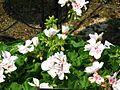 Flower-center133946.jpg