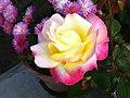 Flower at Parwanoo.JPG