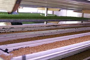 Fodder - A fodder factory set up by an individual farmer to produce customised cattle feed