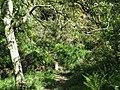 Footbridge in the trees - geograph.org.uk - 1316368.jpg