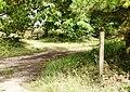 Footpath South of Shotts Copse - geograph.org.uk - 1431651.jpg