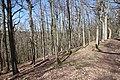 Forêt Départementale de Beauplan à Saint-Rémy-lès-Chevreuse le 14 mars 2018 - 19.jpg