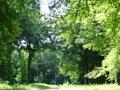 Forêt d'Hesdin secteur de la Jatte.png