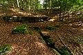 Forêt domaniale de l'Assise 2017-08 n02.jpg