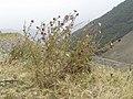 Forca d'Acero3.jpg