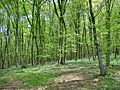 Forest - panoramio - paulnasca (117).jpg