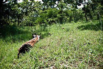 Narsapur, Medak district - Forest