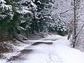 Forest Walk - panoramio (6).jpg