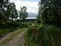 Forest track near Inveraray - geograph.org.uk - 20568.jpg