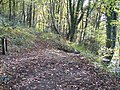 Fork in the path at Moss Valley Country Park - geograph.org.uk - 1038766.jpg