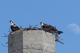 Fort De Soto Park - Birds nesting at the top of the tower