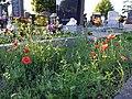 Friedhof Groß-Jedlersdorf Biodiversität sl10.jpg