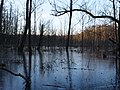 Frozen Teufelsbruch swamp next to crossing path 14.jpg
