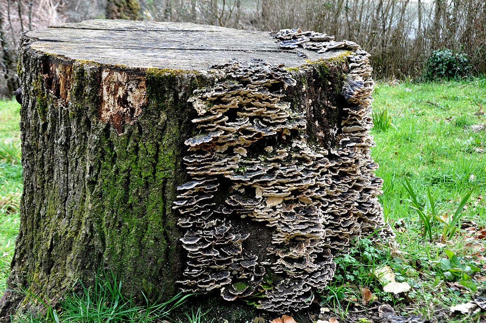 Fungus in a Wood