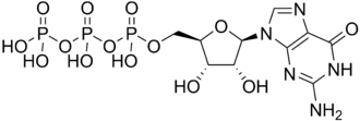 Acid anhydride hydrolases - GTP