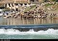 Gamasiab River 2020-04-29 21.jpg