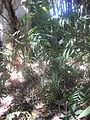 Gardenology.org-IMG 2048 hunt0903.jpg