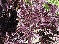 Gardenology.org-IMG 2164 hunt08sep.jpg