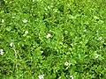 Gardenology.org-IMG 2936 rbgs11jan.jpg