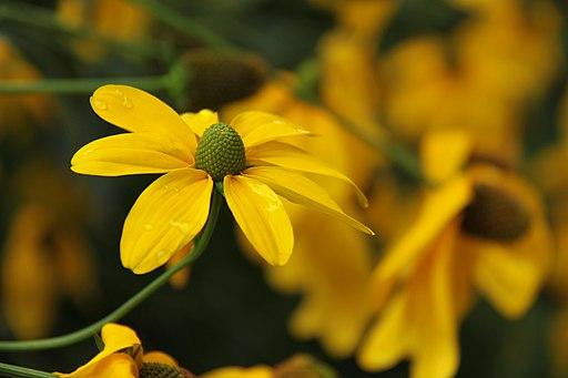 Gartenpflanzen 2012-09-01-0244