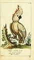 Gemeinnüzzige Naturgeschichte des Thierreichs (Plate 66) (6009080586).jpg