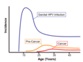 Genital HPV infection incidence graph.png