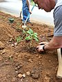 Georgia Native Plant Society planting butterfly garden in Heritage Park, Mableton, Cobb County, Sept 2015 42.jpg