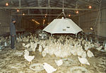 Getamej Chicken Farm.jpg