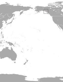 Glacier Bay water shrew species of mammal