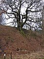 Glenkinnon Oak - geograph.org.uk - 157241.jpg